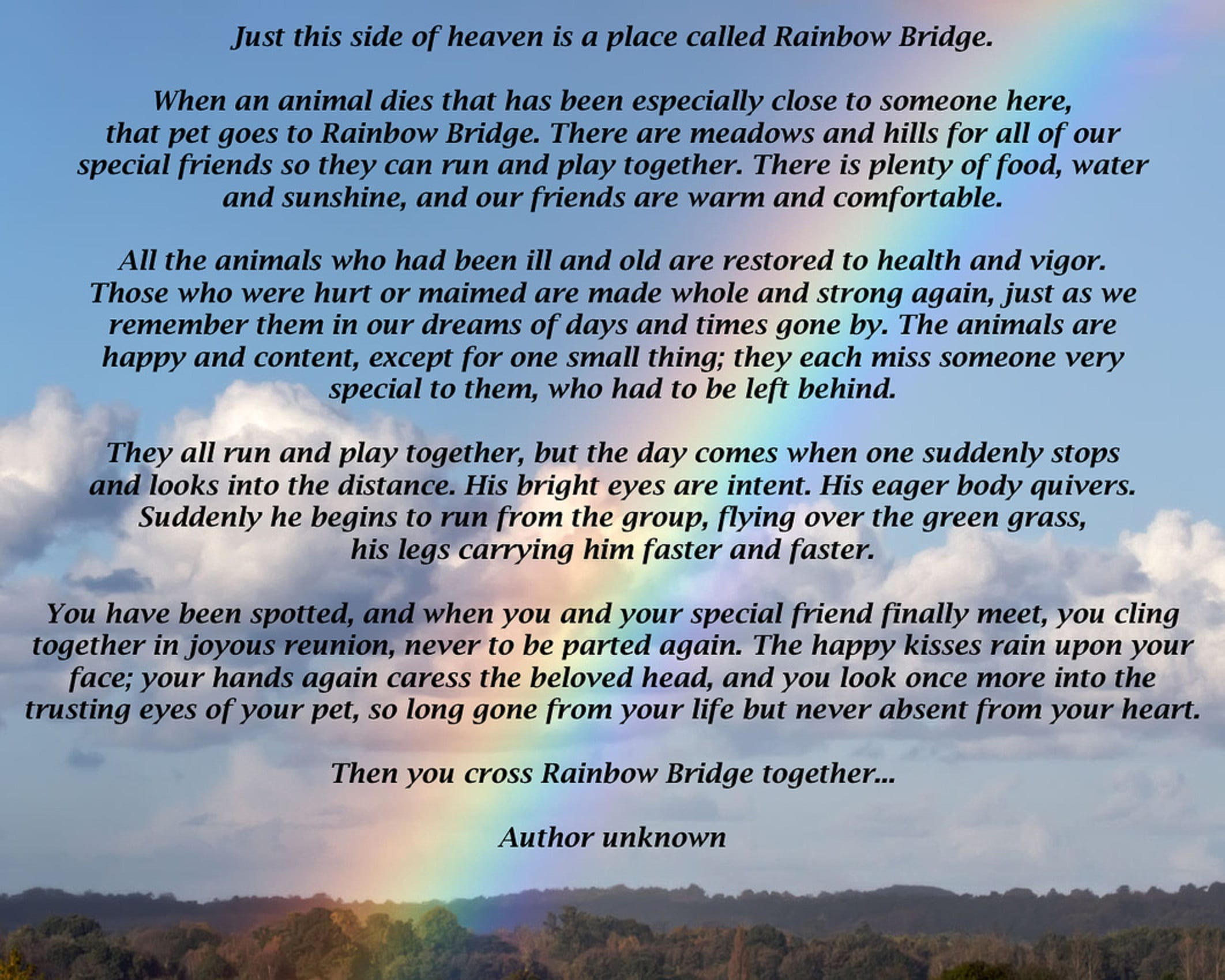 A Forever Home Rescue Foundation   In Memory Rainbow Bridge