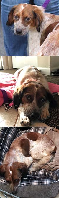 Available Dogs – A Forever Home Rescue Foundation